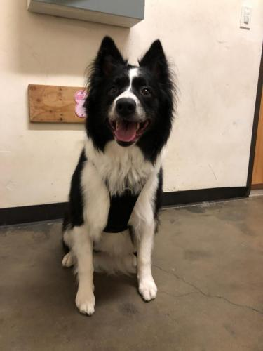 McGraw (Border Collie)