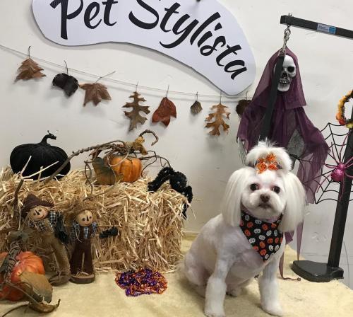 Bella (PoodleMix)