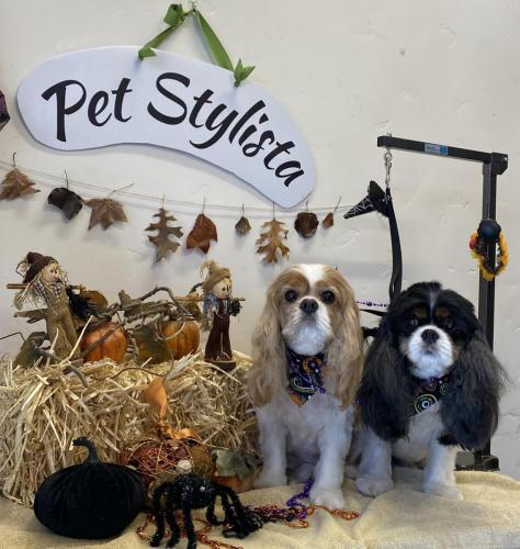 Huntly and Snickers<br>(Cavaliers)