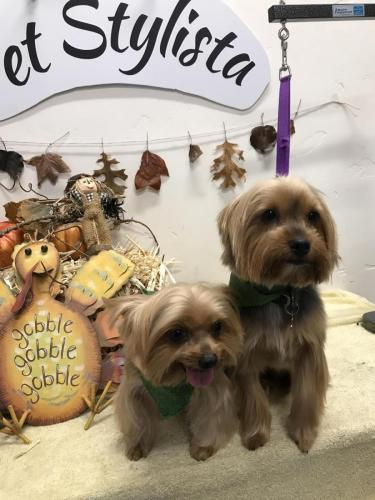 Luna and Ruby<br>(Yorkies)